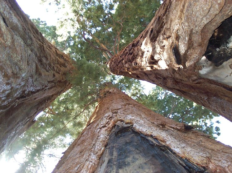 King-Sequoia National Parks
